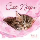 Cat Naps - 2015 Calendar Calendarios