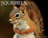 Squirrels - 2015 Calendar Calendars
