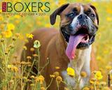 Boxers - 2015 Calendar Calendriers