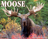 Moose - 2015 Calendar Calendars