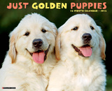 Golden Puppies - 2015 Calendar Calendars