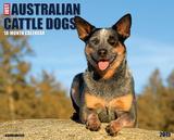 Australian Cattle Dogs - 2015 Calendar Calendars