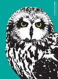 Night Owl - 2015 Simplicity 16 Month Planner Calendars