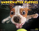 Underwater Puppies - 2015 Calendar Calendars