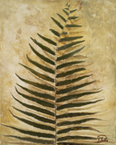 Ferns III Prints by Patricia Quintero-Pinto