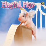 Playful Pigs - 2015 Mini Calendar Calendarios