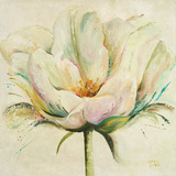 White Double Tulips II Prints by Patricia Quintero-Pinto