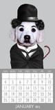 Pets Rock - 2015 Magnetic Calendar Calendars
