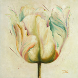 White Double Tulips I Posters by Patricia Quintero-Pinto