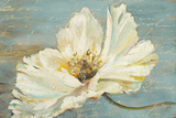 White Peony Posters by Patricia Pinto