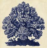 Sea Life III Prints by  Piddix