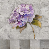 Hydrangeas & Stripes II Prints by Patricia Quintero-Pinto