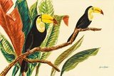 Tropical Toucans II Prints by Linda Baliko