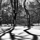 Shadows of Trees Play in Central Park Snow Photographic Print by Philippe Hugonnard