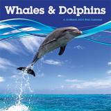 Whales & Dolphins - 2015 Calendar Calendarios