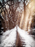 Instants of NY Series - Walking on a Path in Central Park in Winter Photographic Print by Philippe Hugonnard