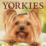 Yorkies - 2015 Calendar Calendars