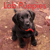 Lab Puppies - 2015 Calendar Calendarios