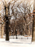 Winter Snow in Central Park Photographic Print by Philippe Hugonnard