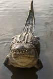 USA, Florida, Orlando. alligator doing water dance at Gatorland. Photographic Print by Lisa S. Engelbrecht