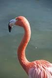 USA, Florida, Orlando. Pink Flamingo at Gatorland. Photographic Print by Lisa S. Engelbrecht