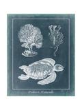 Azure Sea Turtle Study I Poster van  Vision Studio