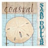 Sanddollar Prints by Carole Stevens