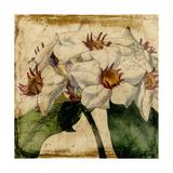 Vibrant Floral VI Premium Giclee Print by  Vision Studio