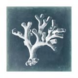 Azure Coral II Prints by Vision Studio