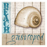 Gastropod Posters by Carole Stevens