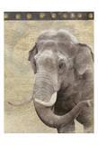 Elephant Láminas por Jace Grey