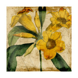 Vibrant Floral V Print by  Vision Studio