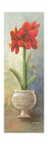 2-Up Amaryllis Vertical Premium Giclee Print by Wendy Russell