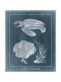 Azure Sea Turtle Study II Schilderijen van  Vision Studio