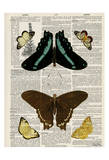 Butterfly Symmetry 2 Poster by Tina Carlson