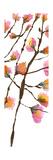 Inky Blossoms II Prints by Deborah Velasquez