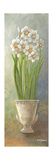 2-Up Narcissus Vertical Premium Giclee Print by Wendy Russell