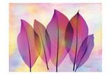 Retroluxed Magnoli Posters by Albert Koetsier