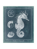 Azure Seahorse Study I Posters by  Vision Studio
