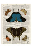 Butterfly Symmetry 1 Prints by Tina Carlson