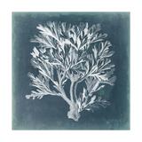 Azure Coral IV Kunstdrucke von  Vision Studio