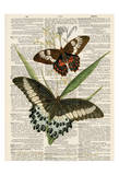 Butterfly Plants 2 Posters by Tina Carlson
