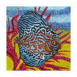 Brilliant Tropical Fish II Posters by Carolee Vitaletti