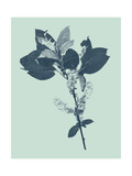 Indigo and Mint Botanical Study V Print by  Vision Studio