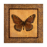 Crackled Butterfly - Monarch Prints by Wendy Russell
