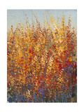 High Desert Blossoms I Giclee Print by Tim O'toole