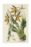 Spring Orchid I Prints by  Ridgeway