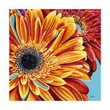 Color Bursts II Premium Giclee Print by Carolee Vitaletti