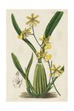 Spring Orchid IV Print by  Ridgeway