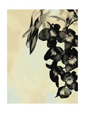 Orchid Blush Panels II Posters by James Burghardt